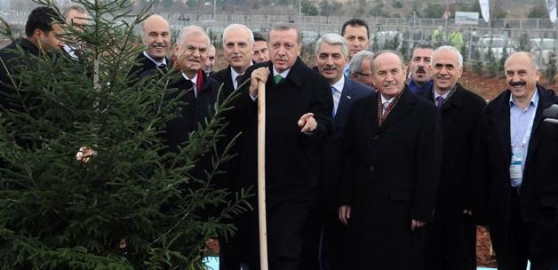Başbakan'ın Diktiği Ağaca Anlamlı İsim