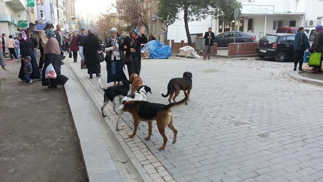 Akçaabat'ın Şehir Merkezi Başıboş Köpeklerden Geçilmiyor.
