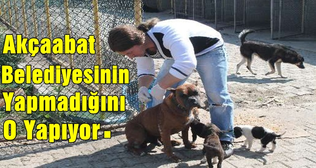 Kendi İmkanlarıyla Köpeklere Bakıyor