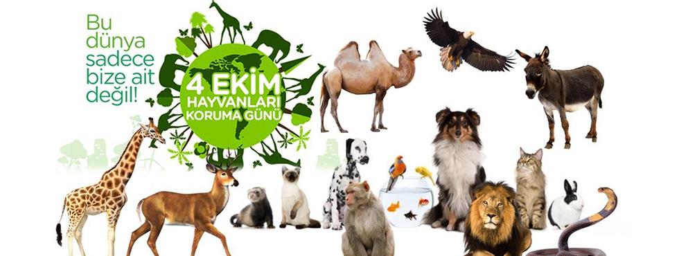 4 Ekim Hayvanları Koruma Günü: Dünyayı Paylaştığımız Dostlarımızın Günü Kutlu Olsun!