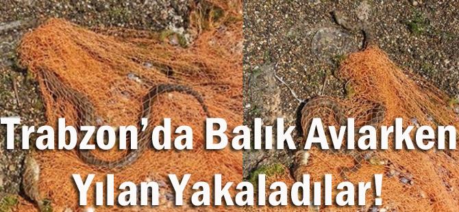 Trabzon'da Balık Avlarken Yılan Yakaladılar…