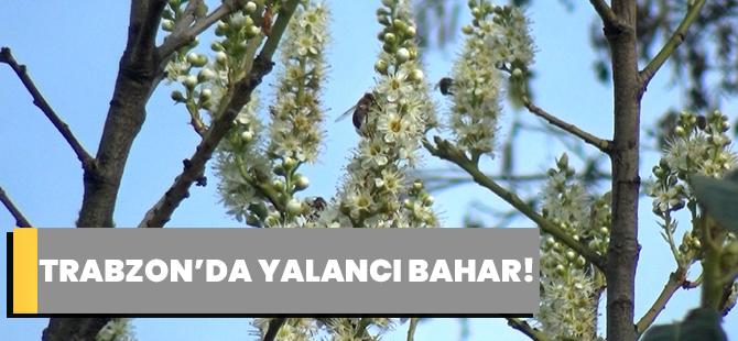 Trabzon'da Yalancı Bahar!