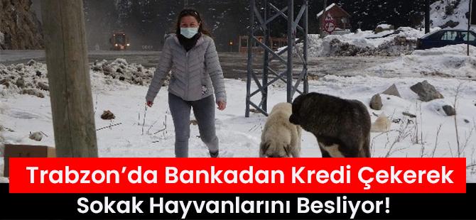 Trabzon'da Bankadan Kredi Çekerek Sokak Hayvanlarını Besliyor!