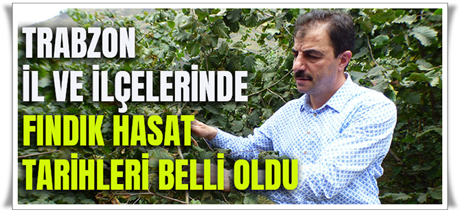 Trabzon İl Ve İlçelerinde Fındık Hasat Tarihleri Belli Oldu