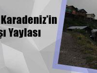 İşte Doğu Karadeniz'in En Sıra Dışı Yaylası