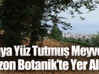 Unutulmaya Yüz Tutmuş Meyve Çeşitleri Trabzon Botanik'te Yer Alacak