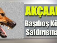 Akçaabat'ta Başıboş Köpeklerin Saldırısına Uğradı