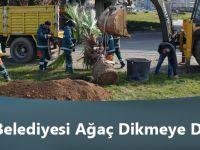 Büyükşehir Belediyesi Ağaç Dikmeye Devam Ediyor