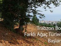 Trabzon Botanik'te Farklı Ağaç Türlerinin Dikimine Başlandı