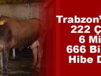 Trabzon'da Bu Yıl 222 Çiftçiye 6 Milyon 660 Bin TL'lik Hibe Desteği