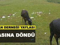 Düzköy Çoban Derneği Yaylası Çöp Yuvasına Döndü.