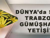 Dünyada Sadece Trabzon Ve Gümüşhane'de Yetişiyor