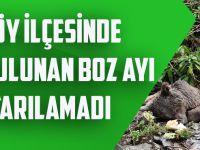 Düzköy İlçesinde Yaralı Bulunan Boz Ayı Kurtarılamadı