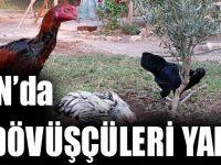 Trabzon'da Horoz Dövüşçüleri Yakalandı!