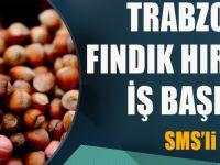 Trabzon'da Fındık Hırsızları İş Başında! SMS'li Uyarı Yapıldı