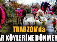 Trabzon'da Yaylacılar Köylerine Dönmeye Başladı