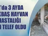 Trabzon'da 3 Ayda 120 Büyükbaş Hayvan Çiçek Hastalığı Yüzünden Telef Oldu