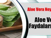 Aloe Vera Neye İyi Geliyor? Aloa Veranın Faydaları Nelerdir?