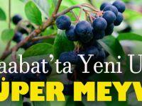 """""""Süper Meyve"""" Akçaabat'ta Üreticilerin Gelir Kapısı Olacak."""