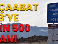 Akçaabat OSB'ye 11 Bin 500 Fidan!