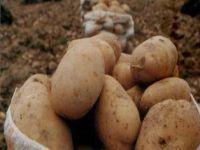 Devlet Patates Fiyatına Müdahale Edecek