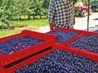 Trabzon çayı için eylem planı