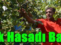 Trabzon'da Sahil Kesiminde Fındık Hasadı Başladı