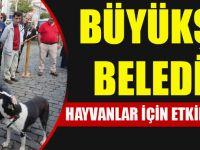 Büyükşehir Belediyesi Hayvanlar İçin Etkinlik Düzenledi