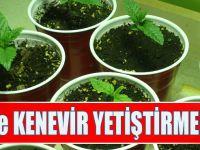 Türkiye'de Kenevir Yetiştirmek Serbest