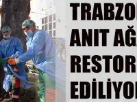 Büyükşehir Belediyesi Trabzon'daki Anıt Ağaçları Restore Ediyor